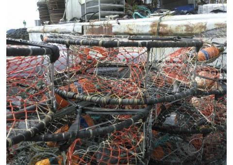 Dungeness crab pots for sale